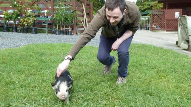 daniel chasing a pig