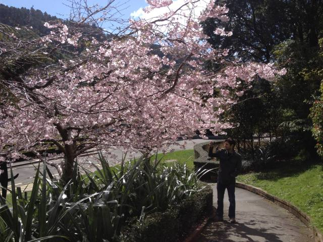 daniel standing by cherry blossom tree
