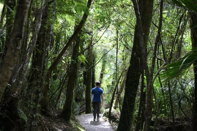 fraser walking in forest