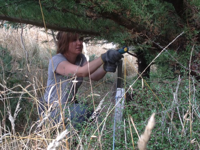 jamie cutting pine tree branches