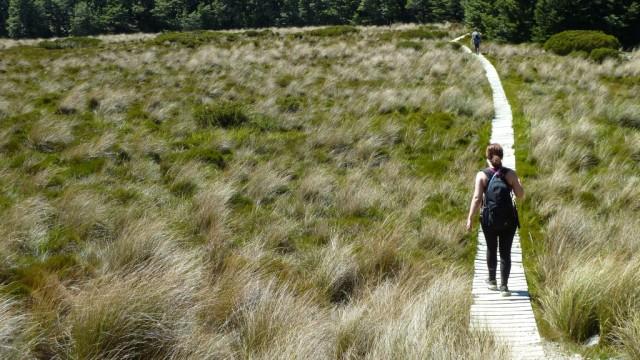 jamie hiking through wetlands on bealey spur track