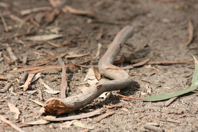snake shaped twig