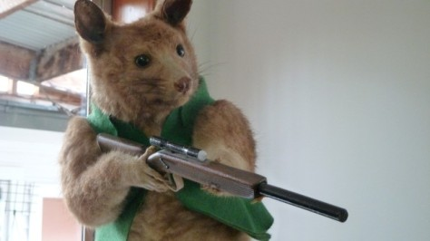 stuffed animal with gun in kokatahi hotel