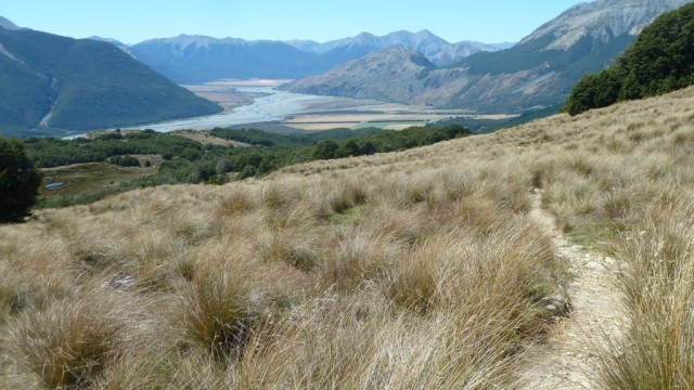 tussock field on bealey spur track