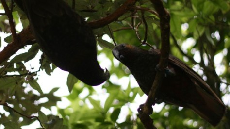 two kaka playing