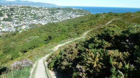One of the many trails in Wellington, New Zealand.